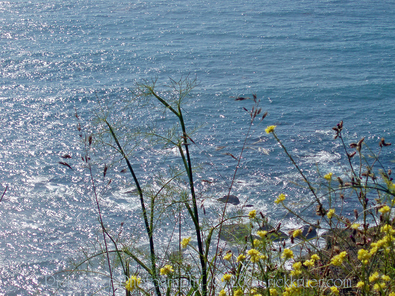 Eileen's photo of the ocean closeup with wildflowers near Big Sur, CA.<br /> P7070213-FlowersOcean-2