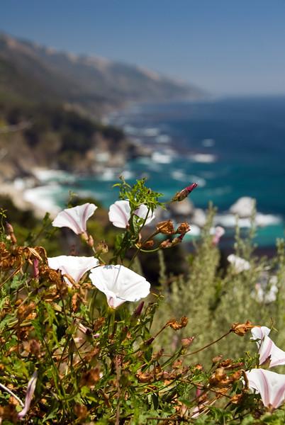 Closeup of ocean wildflowers as we continue to head south along the coast of Big Sur, CA.<br /> D200_2007-07-25DSC_3315-FlowersCloseupOceanView-nice-2 copy.jpg
