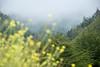 The fog is heavy along the coast of CA 1.<br /> D200_2007-07-22DSC_2861-FogFLowersCA1-2.JPG