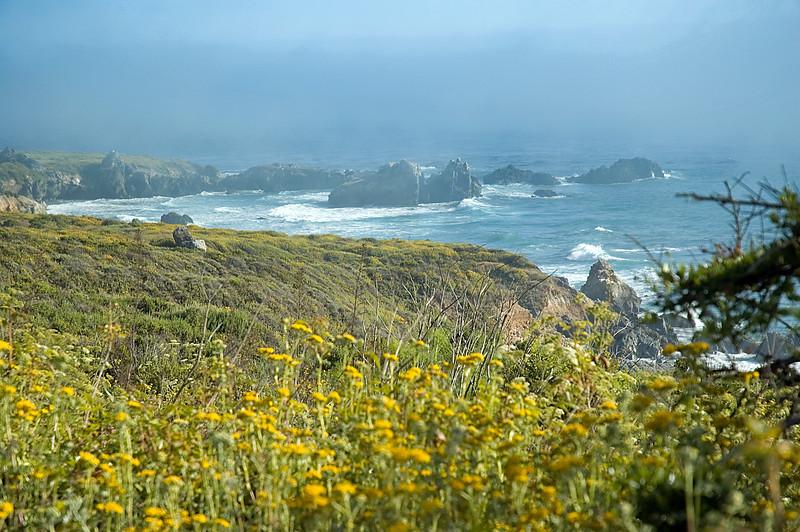 Ocean fog and wildflowers near Pacific City, CA<br /> ND70_2006-07-08DSC_4199-OceanFogFlowers-2.jpg