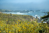 Ocean fog and wildflowers near Pacific City, CA<br /> ND70_2006-07-08DSC_4199-OceanFogFlowers-2.jpg