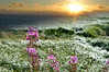 Siletz Bay wild flowers montage with a beautiful Oregon sunset (ND70_2005-07-12DSC_1623-SunsetRaysCloudsWide-1615-montage-4.jpg)