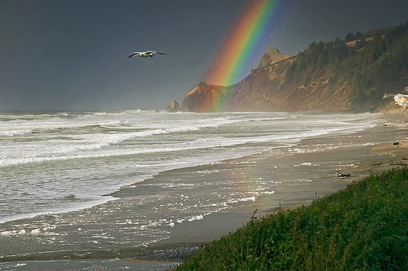 Rainbow at the Beach at Lands End, Lincoln City, Oregon (Zoom) (D70_2006-01-02DSC_2779-LandsEndRainbowCloseupSeagullFlying-nice-8.jpg)<br /> <br /> A beautiful double rainbow formed on the coast within 10 minutes of a rainshower hitting the beach. This is the last photo of the set taken as the rainbow was just starting to fade. A very nice New Year's treat on the Oregon Coast!