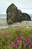 Beautiful flowers and beach with huge boulders at Cape Sebastian, OR.<br /> ND70_2006-07-11DSC_4420-ORCoastCapeSebastionBeachFlowers-nice-4 copy.jpg