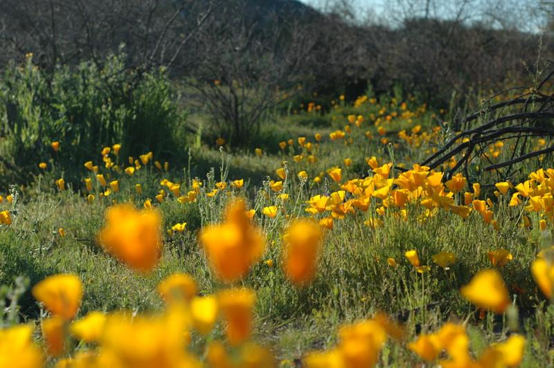 ND70_2008-03-09DSC_7592-WildflowersDOFfar-nice