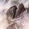 Cascade Creek - Lone Tree in Split Rock