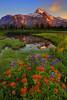 Summer Colors In Jefferson Park - Jefferson Park Wilderness, Oregon