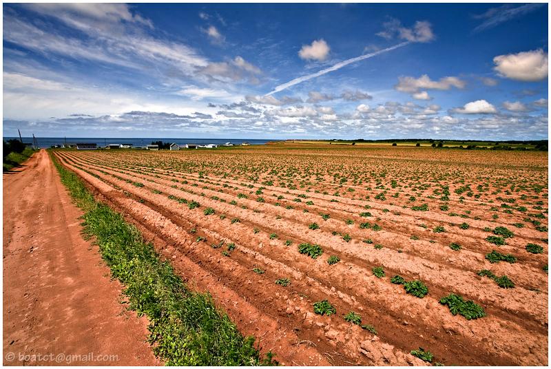 Potato fields. Prince Edward Island, Canada.