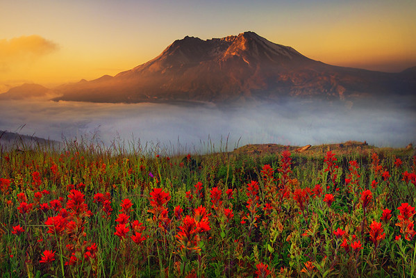 Fire Sunset In Meadow Of Mt St Helens - Johnson Ridge Observatory, Washington
