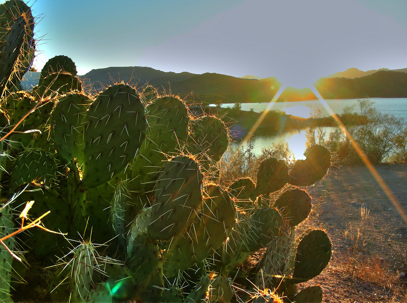 first rays on a prickly pear