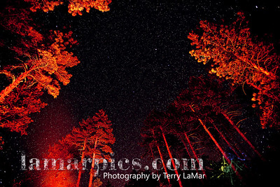 Camp fire-lit pines frame night sky - Mt. Laguna, CA