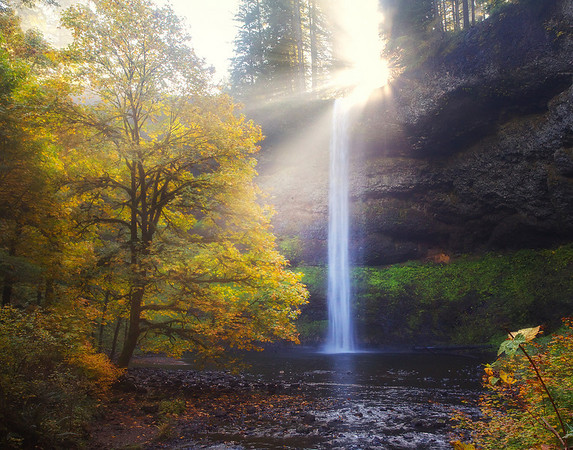 A Burst Of Hope - Silver Falls State Park, Oregon