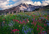 Paradise Wildflowers - Mazama Ridge, Mount Rainier National Park, Washington