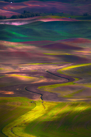 Layers Of Gold - The Palouse, Washington