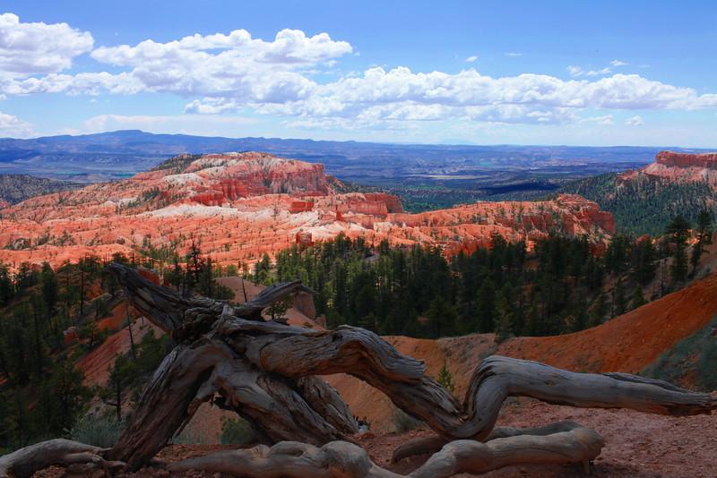 Bryce Canyon NP. Utah