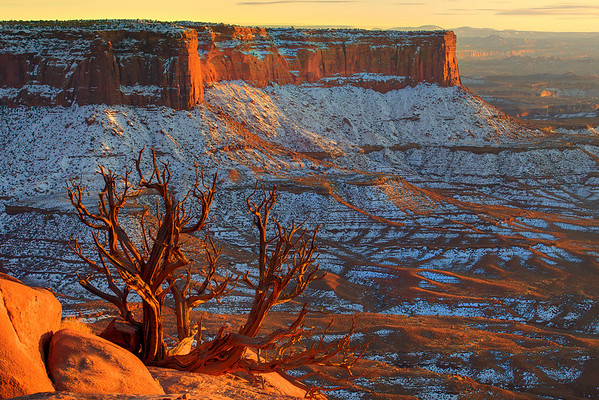 Hanging On By A Stem - Canyonlands National Park, Utah