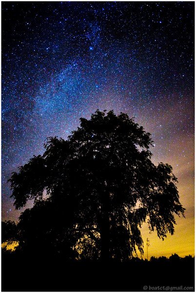 Our galaxy above a willow tree.