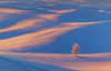 Pink Blues In The Fields - The Palouse, Washington