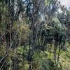 Mānuka (Leptospermum scoparium) and Dracophyllum scrub in sphagnum moss at the edge of Lake Wilkie, Catlins.
