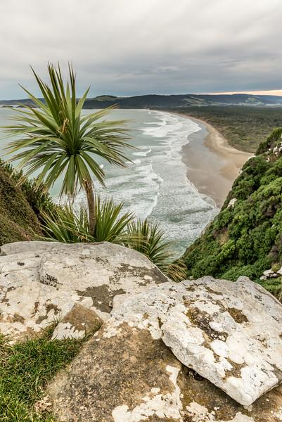 Cabbage tree / tī kōuka (Cordyline australis). McPhee Cove, Tahakopa Bay, Catlins