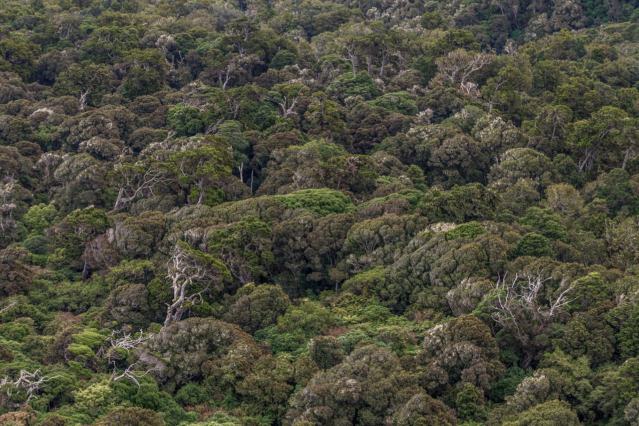 Podocarp forest at Tahakopa Bay, Catlins