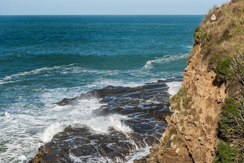 Tautuku Peninsula coastline