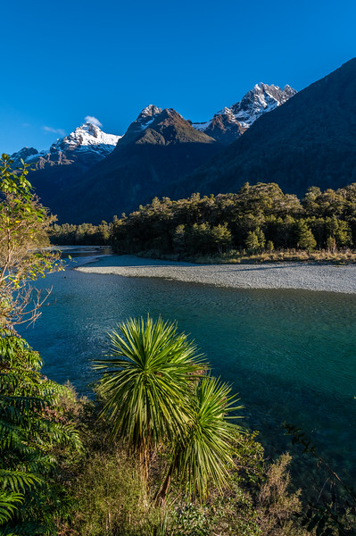 Cabbage tree (Cordyline australis) by the Hollyford River. Mount Tuhawaiki and Mount Madeline above.