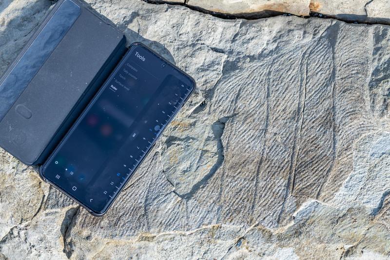 Miocene fossils (Waima Formation). Point Kean, Kaikōura.