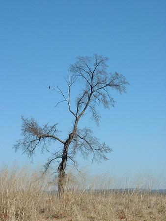 Lone Bird in Tree - Valley Forge, Pennsylvania