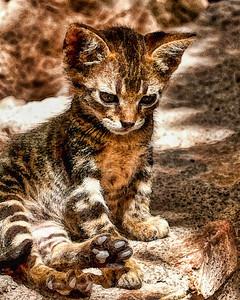 Ferrel kitten