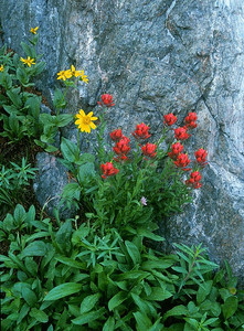 Indian paintbrush and granite