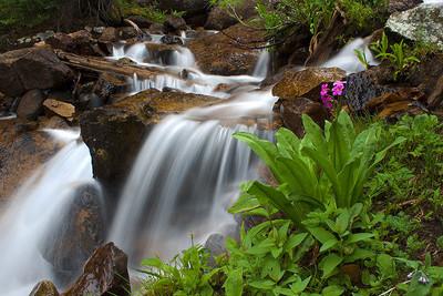 Primrose stream