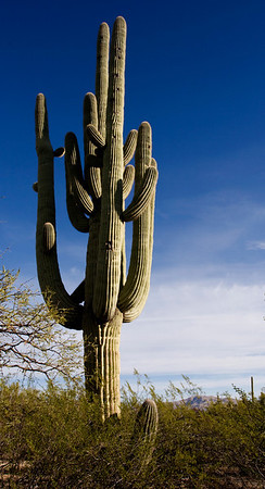 February 2009 Saguaro National Monument