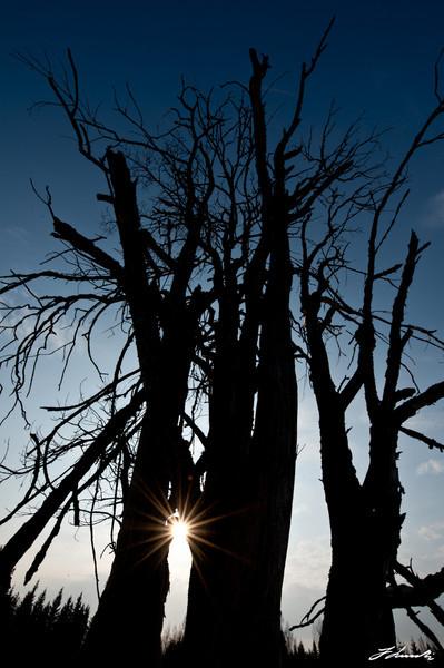 Pääsiäistunnelmaa vuodelta 2010, aurinkoinen päivä...