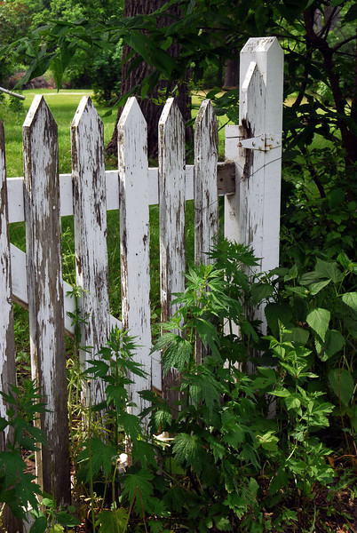 Old garden fence - 01
