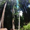 Humboldt Redwoods SP