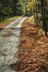A Fall Season Walk In The Woods