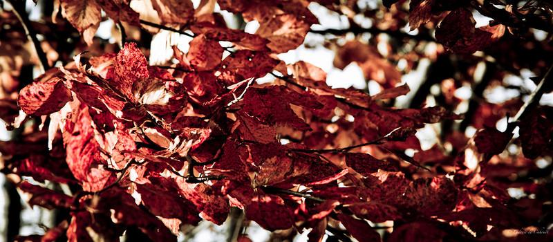 Feuille d'automne - Plateau de Retord - Ain - France<br /> Novembre 2010