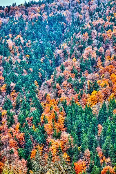 Vallée de Morzine à Thonon - Haute Savoie - France