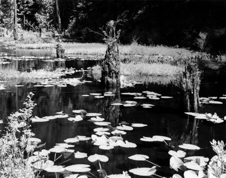 Stumped at Lily Lake