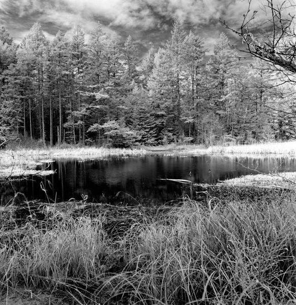 Fox Pond