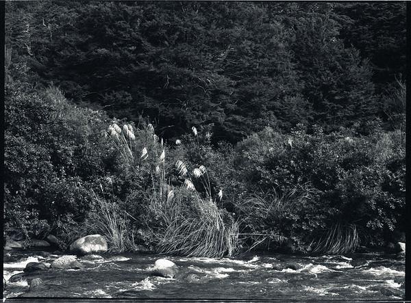 River and bush