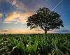 Dave's Tree<br /> <br /> Local photographer David Vernon has photographed this tree dozens of times over a period of several years.