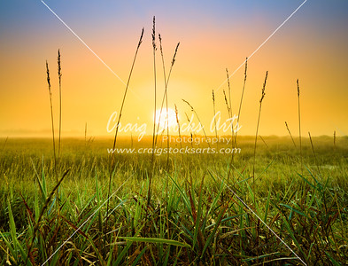 Grass at sunrise at Necedah National Wildlife Refuge.