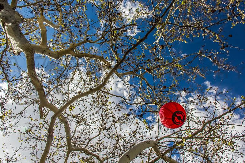 Chinese Lantern in Trees, Sedona, Arizona