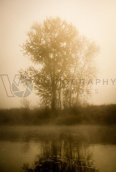Foggy Morning, Bitterroot River, Missoula, Montana