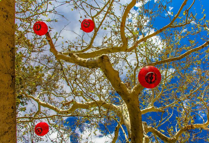 Red Lanterns in Tree, Sedona, Arizona
