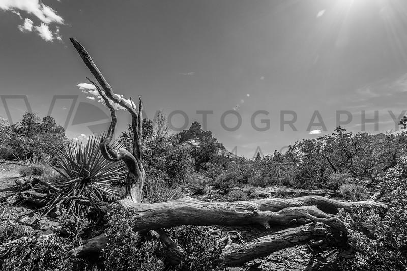 Desert, Sedona, Arizona