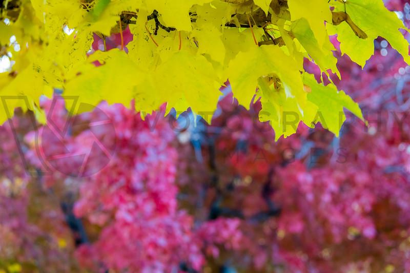 Fall Colors, Missoula, Montana