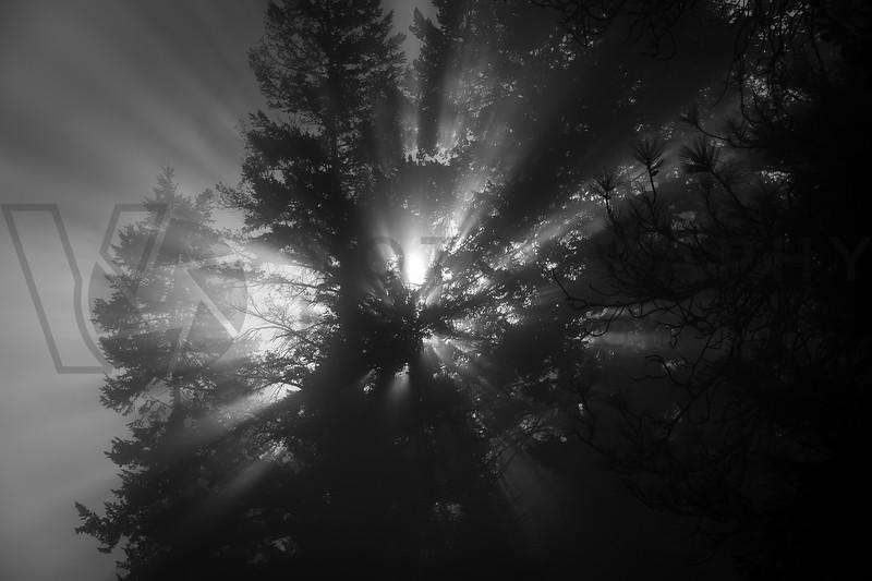 Sun Rays On a Foggy Morning